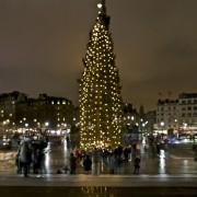 Trafalgar Square Tree